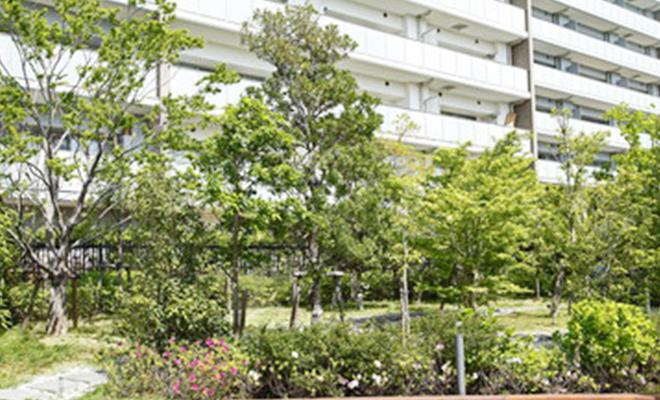 緑地維持管理の写真
